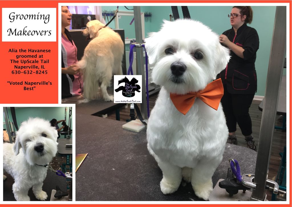 dog grooming naperville